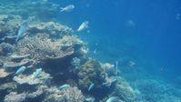 Great Barrier Reef (Symbolbild)