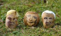 Portrait von Guido Westerwelle, Angela Merkel und Horst Seehofer auf Kartoffeln. Bild: Greenpeace
