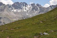 Alpenpflanzen dürften zu den Verlierern des Klimawandels gehören. Quelle: Copyright: Stefan Dullinger/Universität Wien (idw)