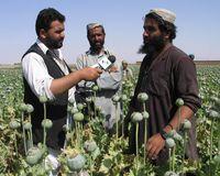 Afghanischer Mohnbauer in seinem Feld