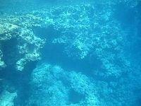 Unterseeische Korallen Bild: EIKE