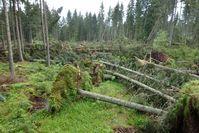 """Bild: """"obs/Forest Stewardship Council (FSC)/Martin Schwenninger"""""""
