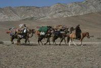 Zunehmend auch in Zentralasien ein seltenes Bild: Wanderhirten verlegen ihren Hausstand mehrfach im Jahr und nutzen so die jeweils besten Weidegründe Quelle: © Senckenberg (idw)