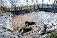 Zwei Pferde mussten aus einer Güllegrube gerettet werden