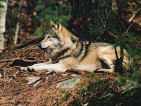 Bild: Bjoersvik / WWF