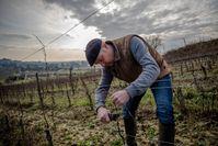 Schon seit einigen Jahren wenden die Winzer in Bordeaux verschiedene önologische und landwirtschaftliche Praktiken an Bild: Verband der Bordeauxweine (CIVB) Fotograf: Verband der Bordeauxweine (CIVB)