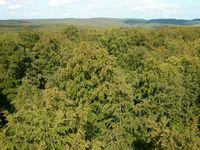 Forst- und Naturwaldfläche