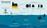 Wie kommt das Plastik ins Meer? Einträge von primärem und sekundärem Mikroplastik in die Ozeane.