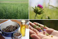 """Vielfalt und Wertschätzung bayerischer Ölpflanzen / Bild: """"obs/Kompetenzzentrum für Ernährung - KErn/KErn"""""""