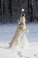 Bild: obs/Bundesverband für Tiergesundheit e.V.