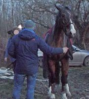 Kurze Zeit später konnte das Pferd wieder stehen. Bild: Feuerwehr Dortmund