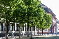 Bild:     Bund deutscher Baumschulen (BdB) e.V.