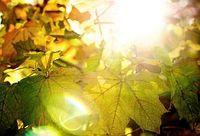 Herbstsonne: Zeit zur Kälteschutz-Aktivierung. Bild: Flickr/Bark