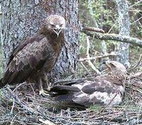 Bild: Deutsche Wildtier Stiftung