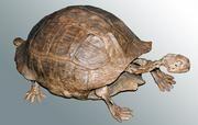 Bild einer fossilen Landschildkröte aus Nordamerika. (c) Torsten Scheyer, Universität Zürich