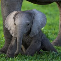 Die Bedrohung durch Wilderei hat in den letzten Jahren in afrikanischen Staaten dramatisch zugenommen. Bild: Michael Poliza / WWF