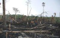 Awá zwischen den verbrannten Überresten ihres Waldes. Bild: Fiona Watson/Survival