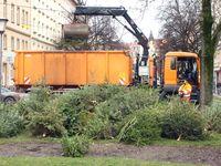 Traditionsgemäß werden in München-Haidhausen in der ersten Januarwoche Christbäume für den Tierpark Hellabrunn als Tiernahrung gesammelt und abgeholt.