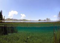 """In kalkreichen, nährstoffarmen Seen bewächst die Furchenstachelige Armleuchteralge (Chara rudis) wie eine Wiese den Gewässerboden und prägt das Ökosystem des ganzen Sees, wie im Bergsee """"Sieben Quellen"""" nahe Sulzbach-Rosenberg in Bayern. Bild: Klaus van de Weyer, lanaplan GbR. (idw)"""