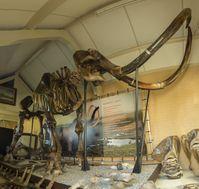 Das komplette Skelett eines Mammuts wurde auf Catawiki für 120,000 Euro versteigert. Bild: Catawiki Fotograf: RENE VAN STORMBROEK
