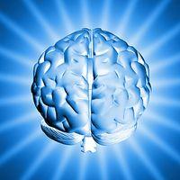 Gehirn: EEG-Helm ermöglicht Wahrheitsfindung. Bild: sxc.hu/artM