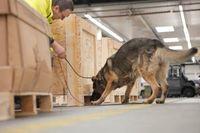 """Als erstes Unternehmen in Deutschland besitzt die Fraport AG eine Hundestaffel, deren Sprengstoffspürhunde zur Kontrolle von Luftfracht eingesetzt werden dürfen. Bild: """"obs/Fraport AG"""""""