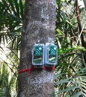 """""""AudioMoth"""": Schutzgebiete effizient überwachen. Bild: Evelyn Piña Covarrubias"""
