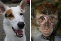 Hunde und manche Affen besitzen in ihren Augen Moleküle, mit denen sie möglicherweise das Magnetfeld der Erde wahrnehmen können. Quelle: Leo Peichl (idw)