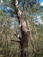 Die Übungsgranate im Baum