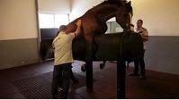 Das weiße Gold des Reitsports - mit der Zucht verdienen viele Pferdebesitzer viel Geld. Bild: ZDF und Matthias Thomaé