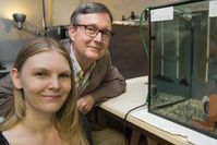 Prof. Dr. Gerhard von der Emde und Sarah Schumacher vom Institut für Zoologie der Universität Bonn m Quelle: © Foto: Barbara Frommann/Uni Bonn (idw)