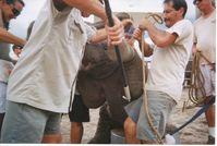 "Brutales ""Training"" von Baby-Elefanten bei Ringling. Bild:  Bros. / © PETA USA"