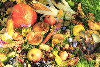 Erntefrisches Obst und Gemüse (Symbolbild)