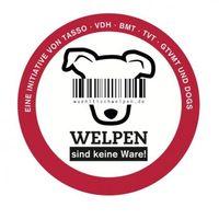 """Aktion gegen den Welpenhandel: Initiative """"Welpen sind keine Ware"""" will die europäische Hundemafia stoppen. Bild: """"obs/Gruner+Jahr, DOGS"""""""
