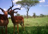 Erwischt: Kamerafalle zeigt Wildtiere der Serengeti. Bild: bit.ly/2JcTt4o