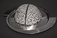 Nudel-Gehirn: Alles Bewusste läuft unbewusst ab. Bild: pixelio.de/M. Berger