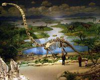 Mamenchisaurus mit extrem langem Hals aus dem Dinosaurier-Museum in Zigong (China). Quelle: (c) Foto: Nicole Klein/Uni Bonn (idw)