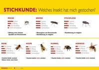 """Stichkunde Insekten. Bild: """"obs/ALK-Abelló Arzneimittel GmbH"""""""