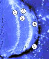 1) West-Marianen-Rücken2) Marianenbecken3) Marianen-Inseln4) MarianenForearc-Becken5) Marianengraben
