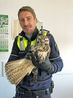 Polizeikommissar Christian Kaiser fing den Raubvogel, bei dem es sich wahrscheinlich um einen Bussard handelt, mit einem Karton und einer Decke ein und brachte es gemeinsam mit einer Kollegin zur Wache. Bild: Polizei