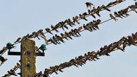 Bundestag verweigert sich AfD-Antrag, den in EU-Ländern praktizierten illegalen Fang- und Tötungsmethoden von Vögeln entgegenzuwirken.