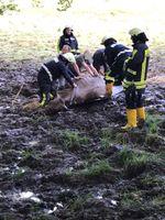 Feuerwehr Hattingen rettet eingesunke Kuh