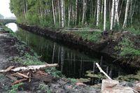 Werden Entwässerungsgräben angestaut, bleibt das Wasser im Torfboden und das Moor kann sich regenerieren