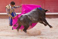Stierkämpfer beim Stierkampf (Symbolbild)