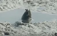 "Bild: Screenshot Youtube Video ""Mystery creature pokes out of a mud pool in Queensland"""