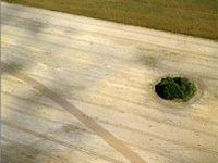 Bild: M. Czasnojc / WWF