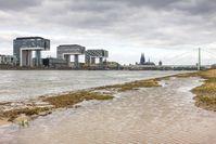 Die Rheinwiesen in Köln stehen schon unter Wasser.