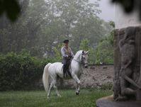 Fast alle modernen Hengste stammen väterlicherseits von orientalischen Pferden ab. Quelle: Spanische Hofreitschule (idw)