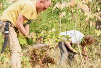 Die Freiwilligen entnehmen die Spätblühende Traubenkirsche (Prunus serotina)  Bild: Bergwaldprojekt e.V. Fotograf: Bergwaldprojekt e.V.