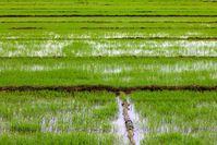 http://www.lucci-vietnam.info/ Quelle: Foto: D. Meinhardi/LUCCi (idw)